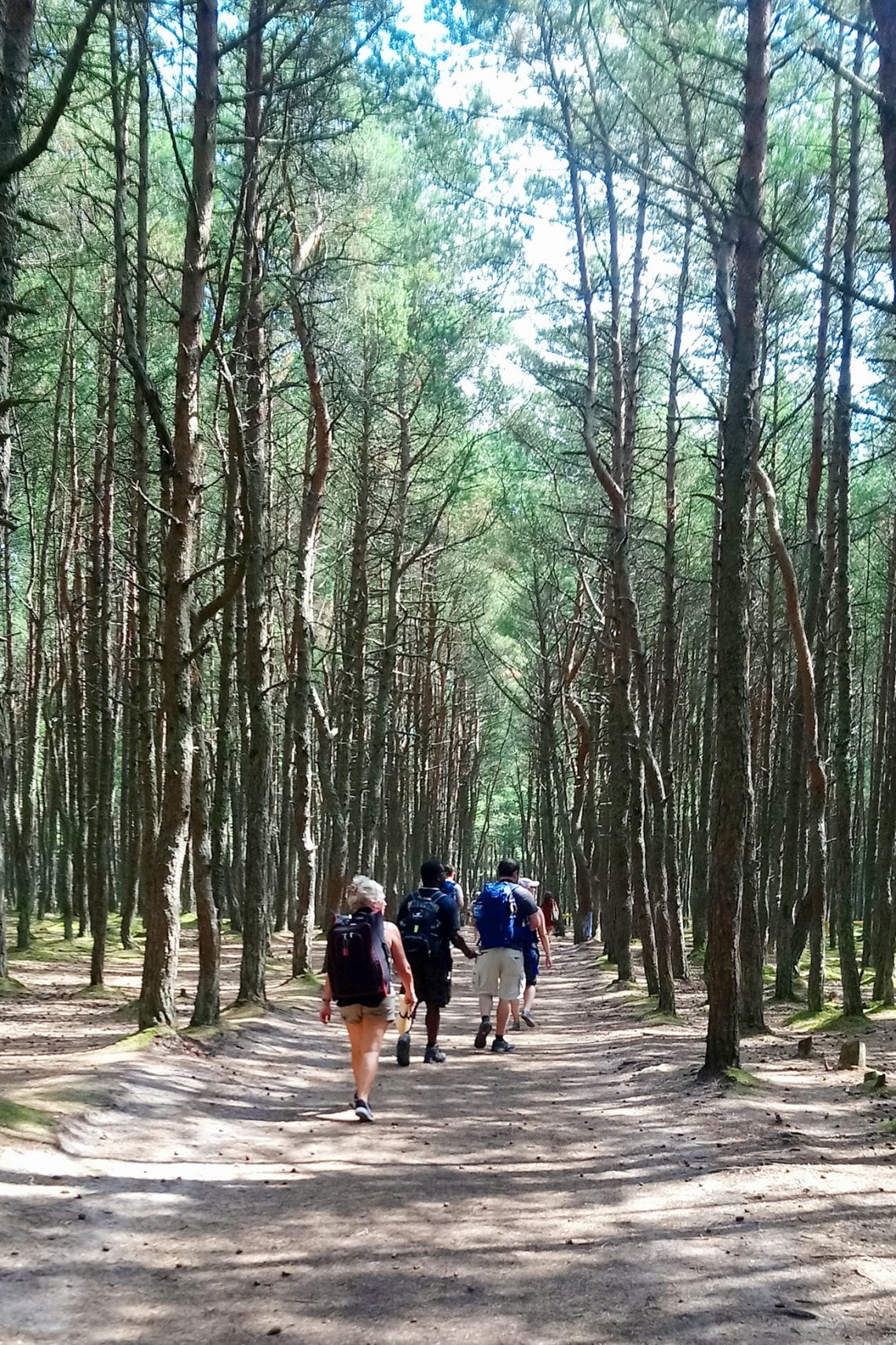 curonian spit paths in the woods 2