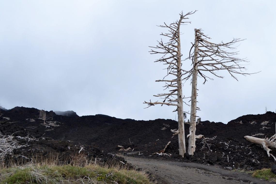 etna petrified trees