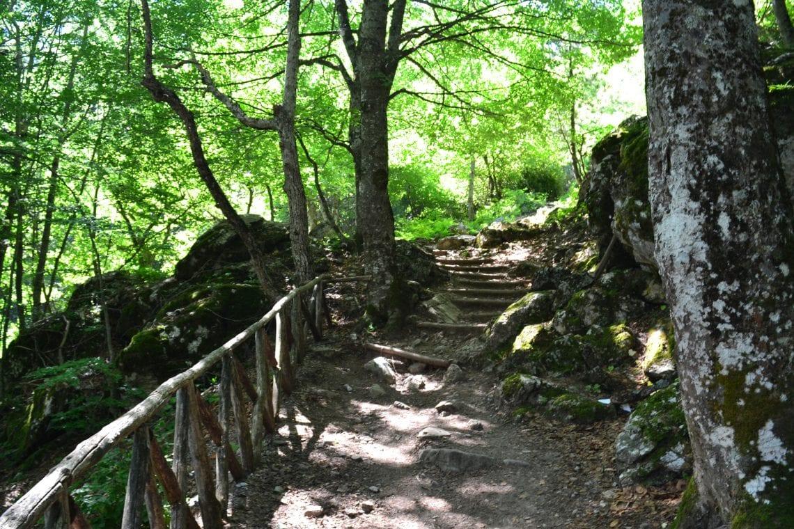 mt olympus enchanting woods