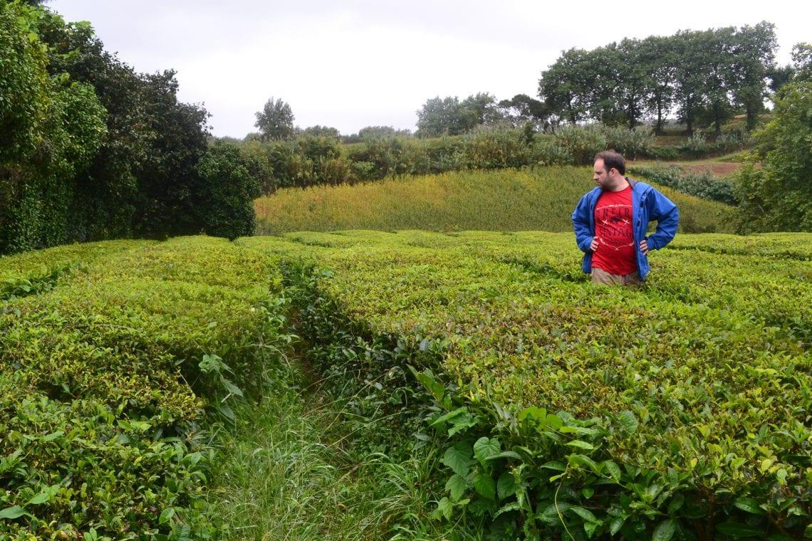 azores maz inspecting the tea fields