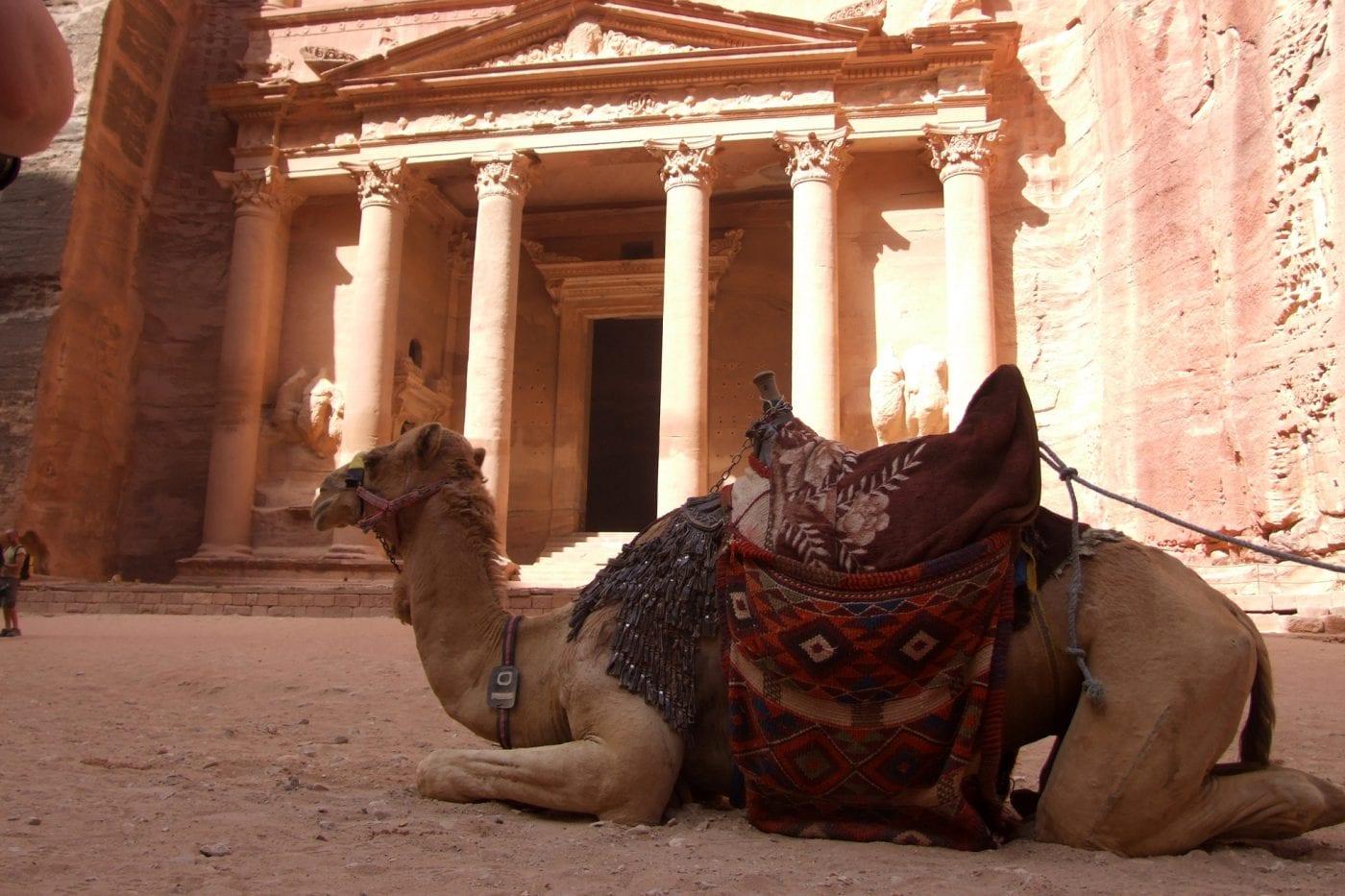 petra camel outside the treasury