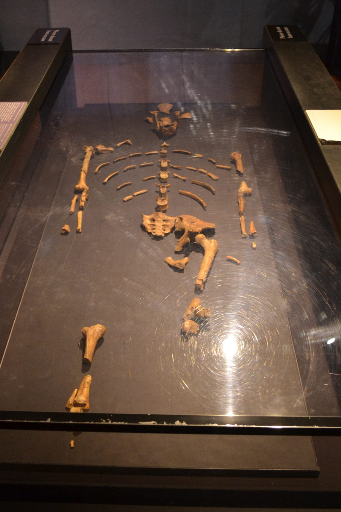 somaliland lucy the skeleton