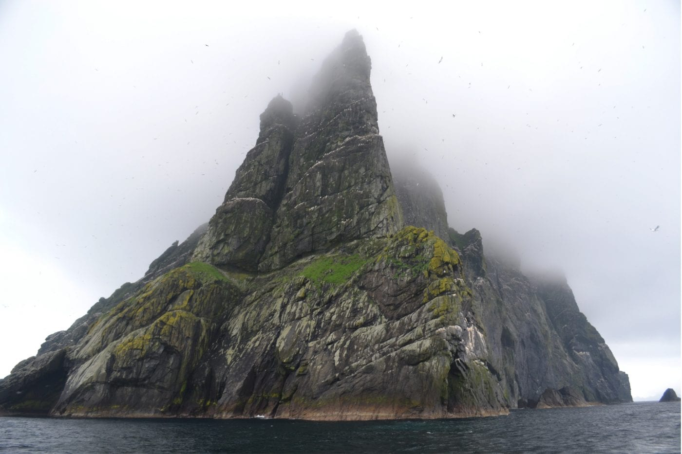 st kilda these massive cliffs are home to some of the most important bird populations they all smell pretty bad